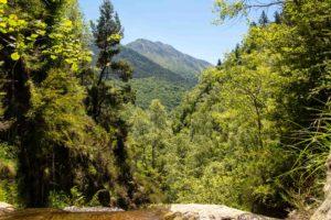 canyon rivière montagne forêt